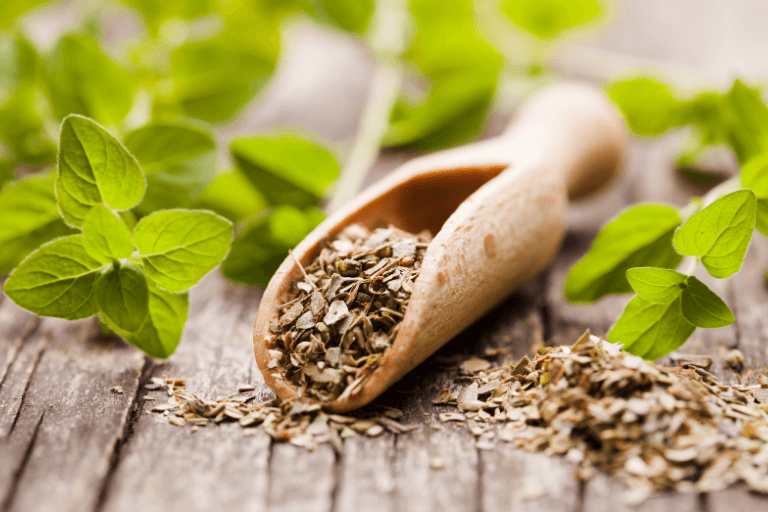 The benefits of Greek Oregano